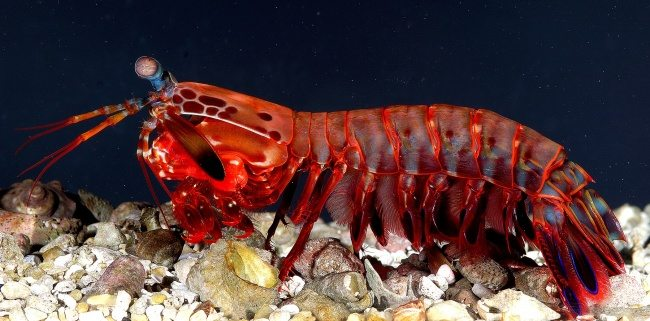 10 Creatures with supernatural powers in real life