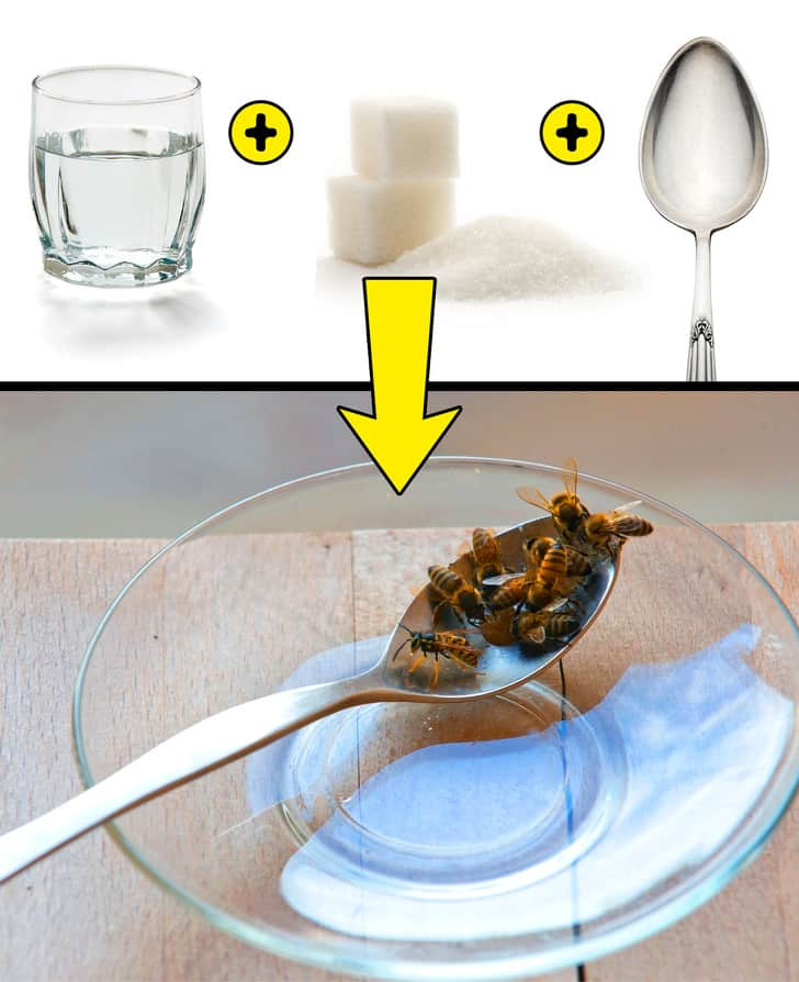 Spoon Of Sugar Water For Bees To Save Human Race
