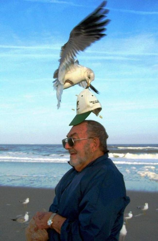 20+ perfectly timed photos