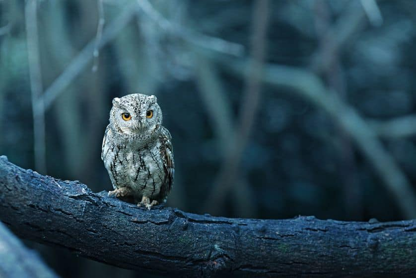 owls for ghosts